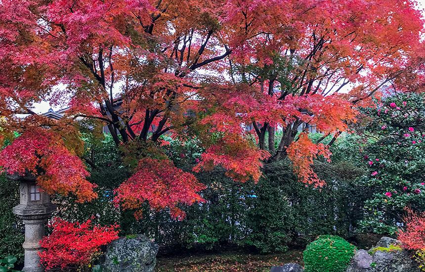 天得院秋の枯山水庭園