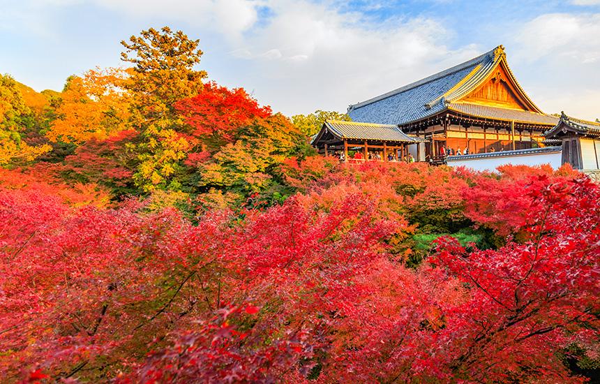 京都東福寺の紅葉