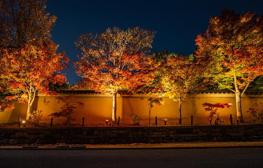 天得院-秋のライトアップ