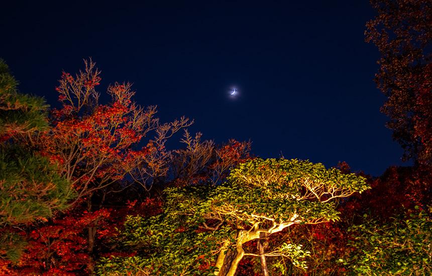 天得院-秋のライトアップ-三日月の庭園