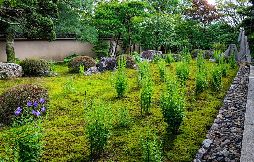 天得院_初夏の拝観前の枯山水庭園