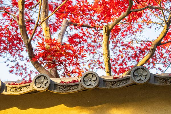 天得院の屋根瓦に積もる紅葉