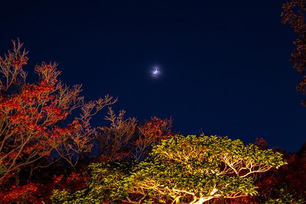 天得院枯山水庭園からのお月見